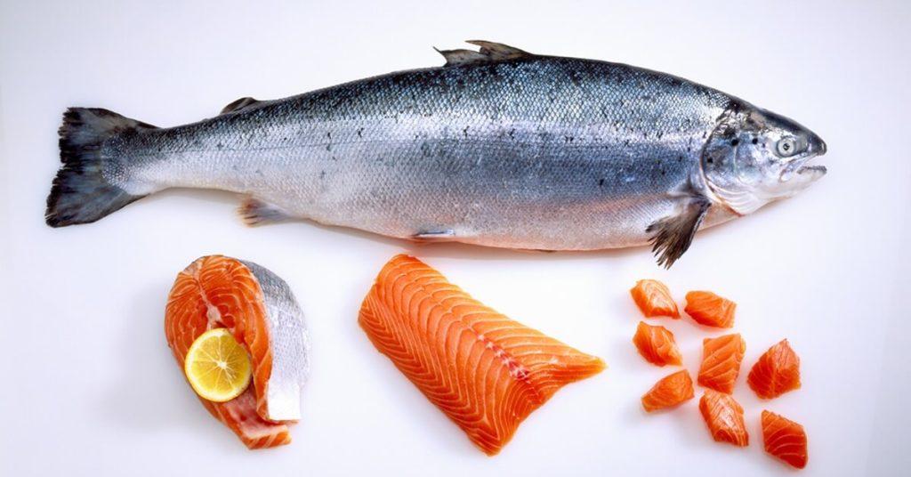 سمكة سمينة
