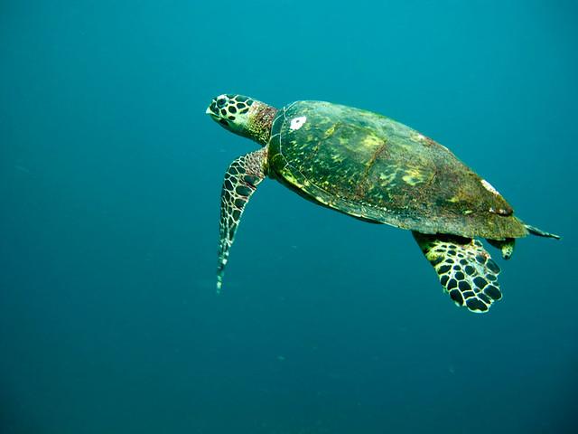 محمية السلاحف الخضراء