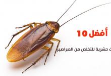 أفضل 10 مبيدات حشرية للتخلص من الصراصير