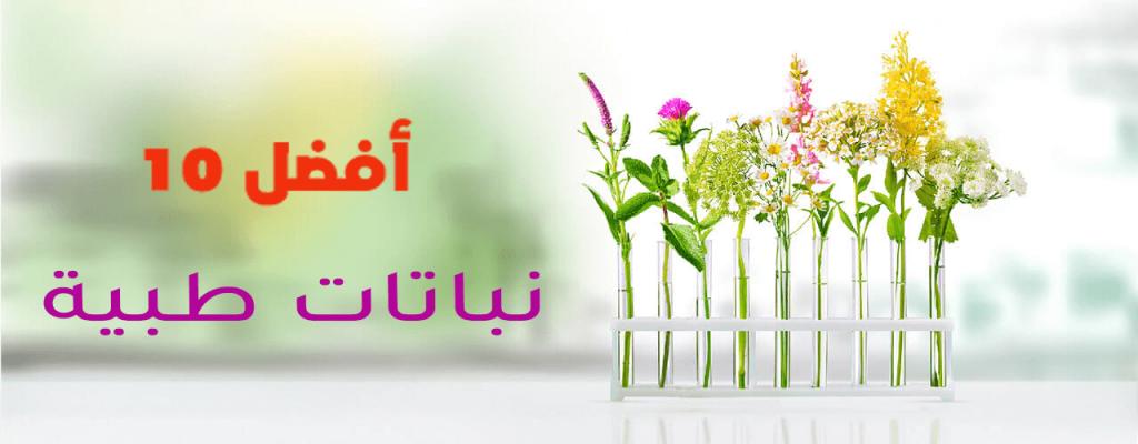 أفضل 10 نباتات طبية