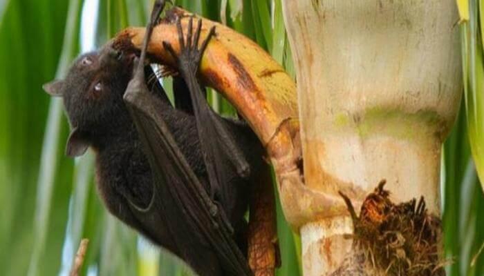 منع وصول الخفافيش او الخنازير الي المنتجات الغذائية