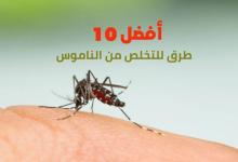 أفضل 10 طرق للتخلص من الناموس