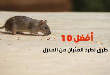 أفضل 10 طرق لطرد الفئران من المنزل