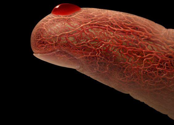 تقوية الأوعية الدموية