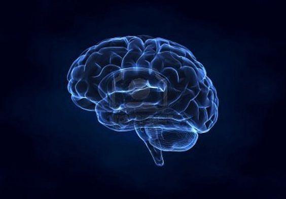 تغذية المخ