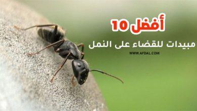 أفضل 10 مبيدات للقضاء على النمل