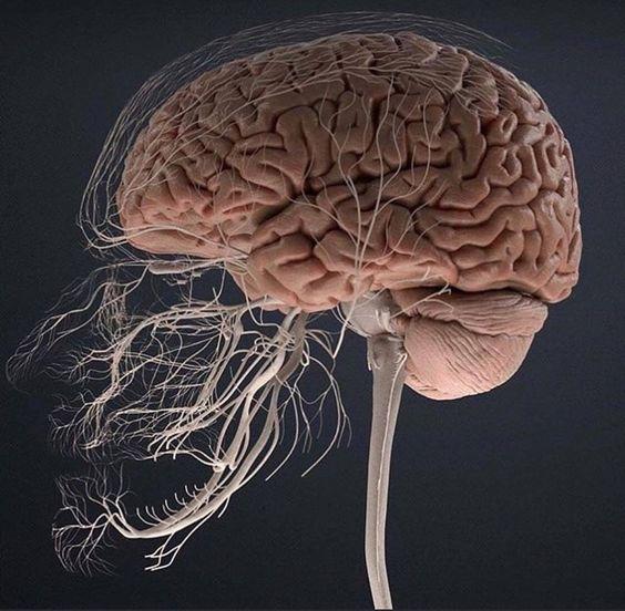 تنشيط الجهاز العصبي