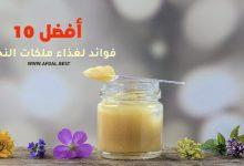 أفضل 10 فوائد لغذاء ملكات النحل